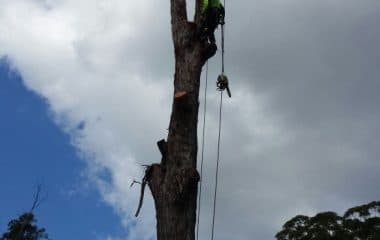 Tree branch cutting sydney