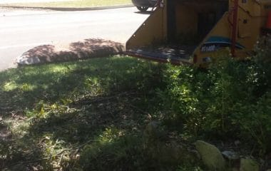 tree waste removal services