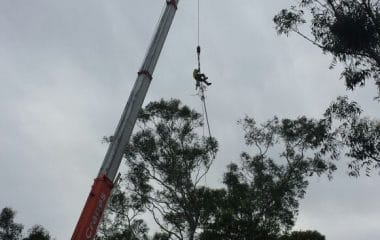 a man climbing the tree with the help of a crane