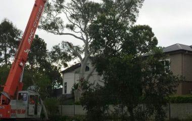 crane for tree climbing