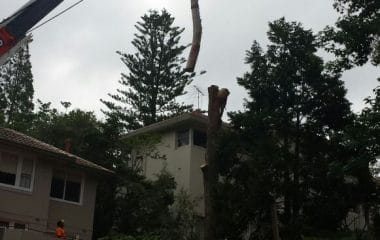tree cutting and removal service