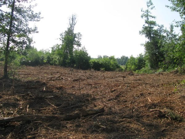 Land Clearing Services in Sydney