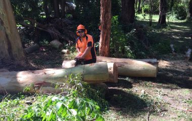 Tree Trunk Cutting