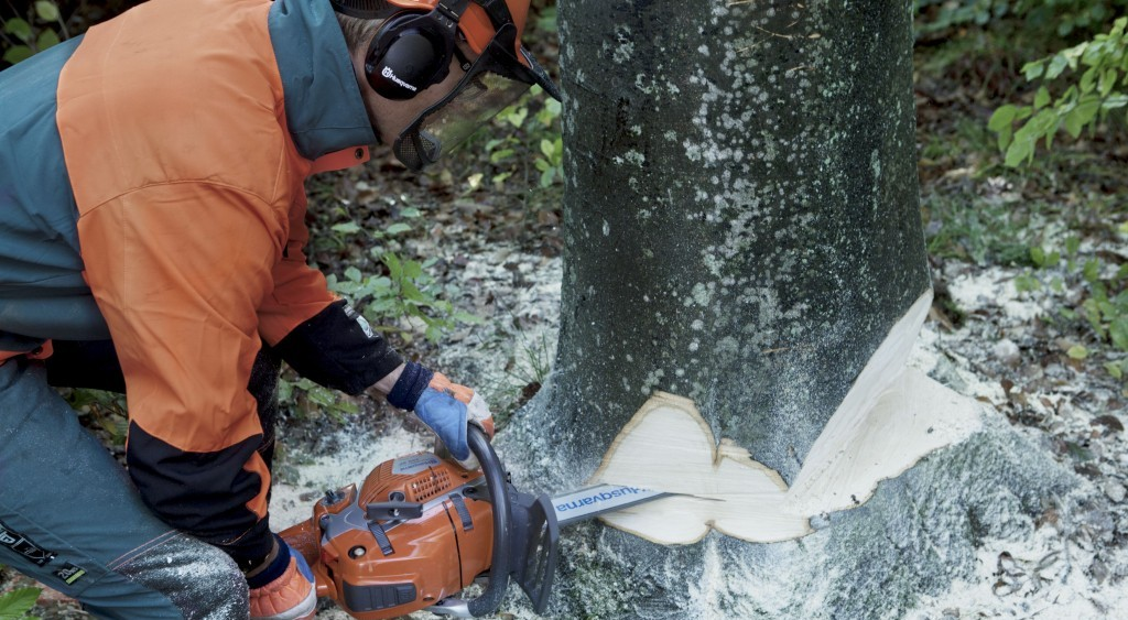 Tree Cutting Wollstonecraft