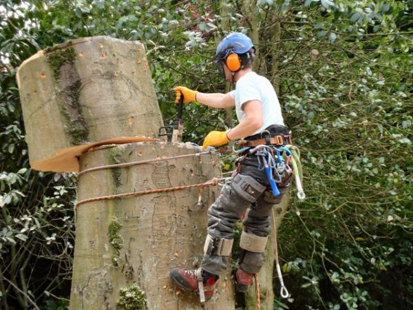Tree Services Ellis Lane