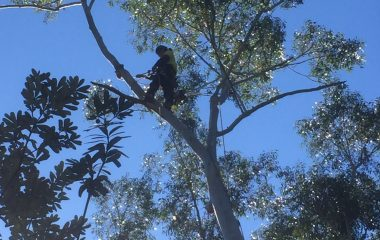man climbing in the tree
