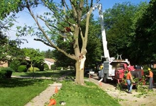 Tree Cutting Northshore