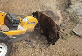 Stump Grinding Services Sydney