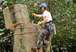 Tree Removal Services in North Shore